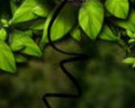 0044_creat_3d_leaf_use_photoshop_Banner