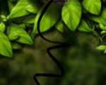 0044_creat_3d_leaf_use_photoshop_Banner