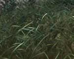 ABOUTCG Cg共和国 绘画 草