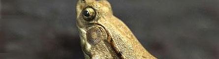 ABOUTCG CG共和国 ZBrush maya渲染 树蛙