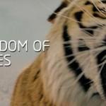 电影中的动物明星电脑CG技术的进程