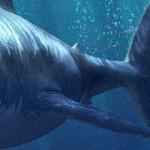 ZBrush制作水下鲨鱼的3D制作流程