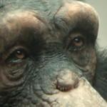 Making of 98% Human使用XSI制作猩猩的过程解析