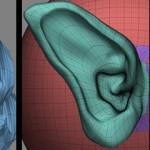 用Zbrush雕刻一只耳朵
