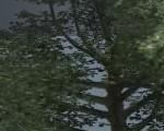 0395_Speed_Tree_Intro_P02_Banner