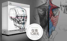 艺用人体解剖实用教学