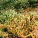 使用blender制作逼真的草地效果