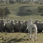 WOOLMARK品牌宣传短片以及制作特效解析