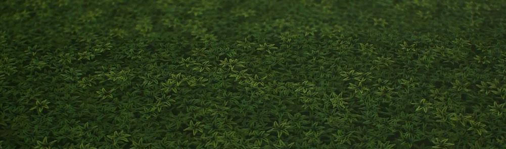 substancedesignergrass