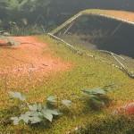 制作写实级别的植物覆盖的废旧汽车场景