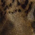 MPC制作的jaguar广告,分解了美洲豹的生物制作,叹为观止