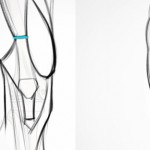 Proko讲解腿部肌肉结构